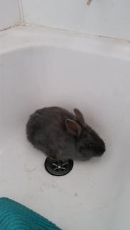 Giveaway Rabbit