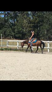 Stunning quarter horse mare Lilydale Yarra Ranges Preview