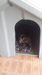 I am looking for a good home, @I am luna a girl Cannington Canning Area Preview