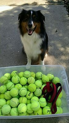100 and 5 used tennis balls 105 in total chairs, dogs .FedEx so no p.o box😁