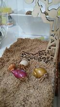 HERMIT CRABS X 4 with Home and Assessories Bondi Beach Eastern Suburbs Preview