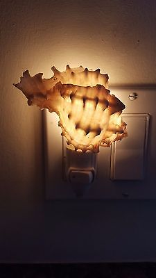 Novel Natural Color Seashell Night Light With Clear Bulb & Working