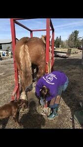 Patient, reliable Farriers accepting new clients