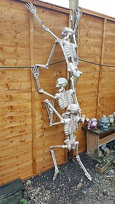 Halloween 3ft 6 inch life size poseable skeleton Perfect decoration for parties - Poseable Skeletons For Halloween