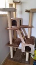 Cat Scratching House - Multi Level Ringwood Maroondah Area Preview