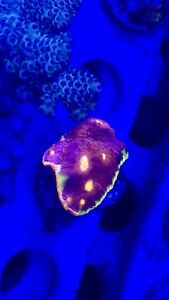 Beautiful Reef Coral Frags for sale