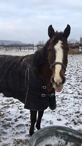 4y.o quarts horse for sale/lease