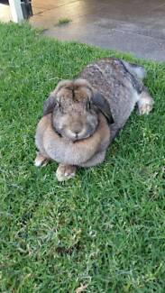 Rabbit:. Free to the right home