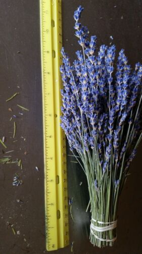 Dried Lavender Bunch 2020 Harvest  Bright Beautiful Bunches 100 to 150 Stems