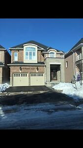 Stunning basement available in Richmond Hill for rent