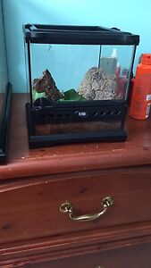 Baby ball python and sling Indian ornamental