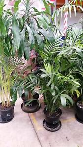 Plants ex-rental indoor and shade NEW STOCK Glynde Norwood Area Preview