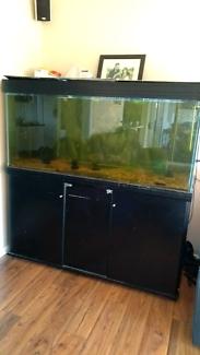 Aquarium 5 x 2 x 2 complete setup - buyer to remove