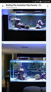 Fish tank 850L Salt water/reef aquarium Rossmoyne Canning Area Preview