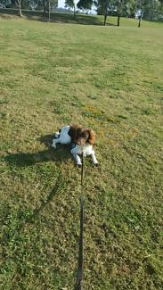 Basic Obedience - Dog Training