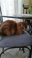 Chat perdu à Mirabel-en-Haut