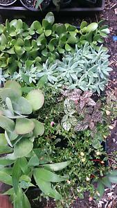 Plants for sale $2-$8 per pot pick up maroochydoore Maroochydore Maroochydore Area Preview