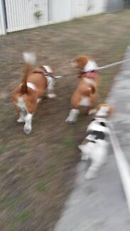 Aimee's Dog Walking Bellarine Peninsula