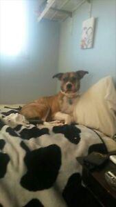 Missing dog!!!