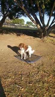 Manners Class - Dog Training