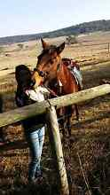 Horse for sale Warwick Southern Downs Preview