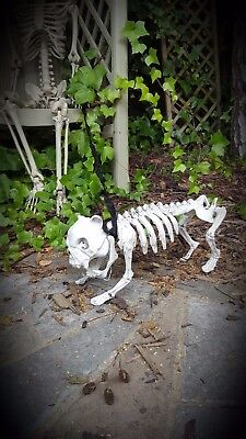 Outdoor Halloween Sounds (Light up + Sound Skeleton Dog on Lead Halloween Decoration Skull Outdoor Garden)