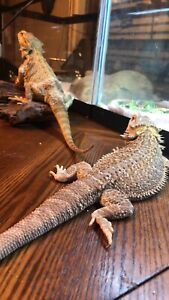 Rehome your reptiles with me