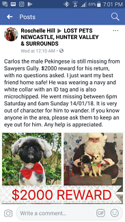Missing fur baby Sawyers Gully