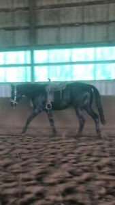 3 year old takehner thoroughbred