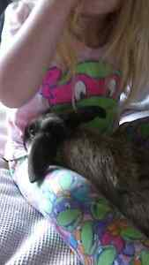 Bunnies 10-12 weeks Ulverstone Central Coast Preview