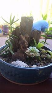 Beautiful pot Plant filled with assorted succulents. Hocking Wanneroo Area Preview