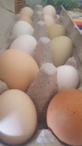 Easter eggs!!! Burra Queanbeyan Area Preview