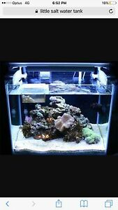 Wanted salt water tank Newcastle Newcastle Area Preview
