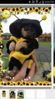 Bumble Bee Suits Rosemeadow Campbelltown Area Preview