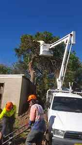 TREE REMOVAL AND STUMP GRINDING GREAT SERVICE AT AFFORDABLE PRICE Sydney City Inner Sydney Preview