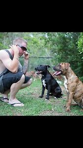 Dogs need a home Adelaide CBD Adelaide City Preview