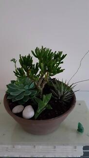 Amazing Succulent creations.