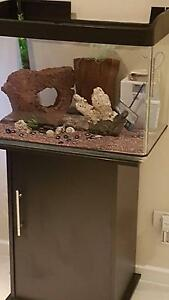 Seahorse x2 with Aquarium set-up Banksia Grove Wanneroo Area Preview