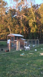 Hard wood Chicken coop with 6 nesting boxes