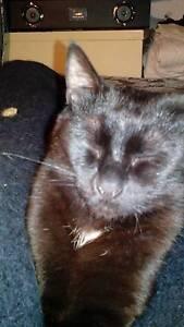 Lost: little black cat. Footscray Maribyrnong Area Preview