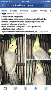 Our Birds Are Up For Adoption At Iz's Small Parrot Haven!