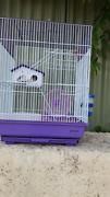 MICE NEED A HOME!!! Perth Perth City Area Preview