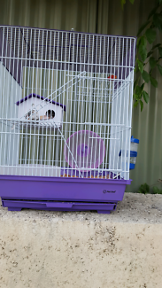 MICE NEED A HOME!!! Perth Perth City Area Preview