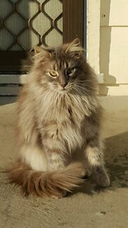 FREE 2 FEMALE CATS Raymond Terrace Port Stephens Area Preview