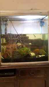 Fish tank + Cichlid fish. Dulwich Hill Marrickville Area Preview