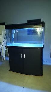Aqua One AR980 fish tank and cabinet! Only $600! Great Present! Gwelup Stirling Area Preview