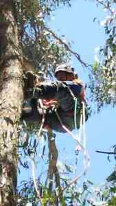 Litchfield Tree Trims Cessnock Cessnock Area Preview