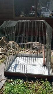 Parrot cage Lower Beechmont Ipswich South Preview