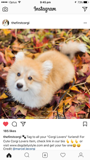 Wanted: Pembroke Welsh Corgi puppy
