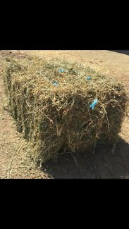 WANTED!!! Grassy lucern or Grass hay (not wet)